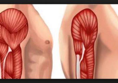 التمرين ما هي أقصى مدة يمكنك الانقطاع عنه قبل خسارة كتلتك العضلية ولياقتك ؟